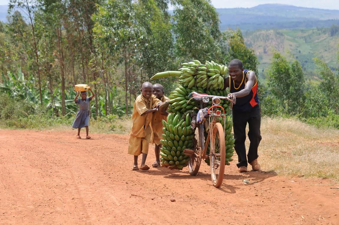 де ростуть банани в Африці