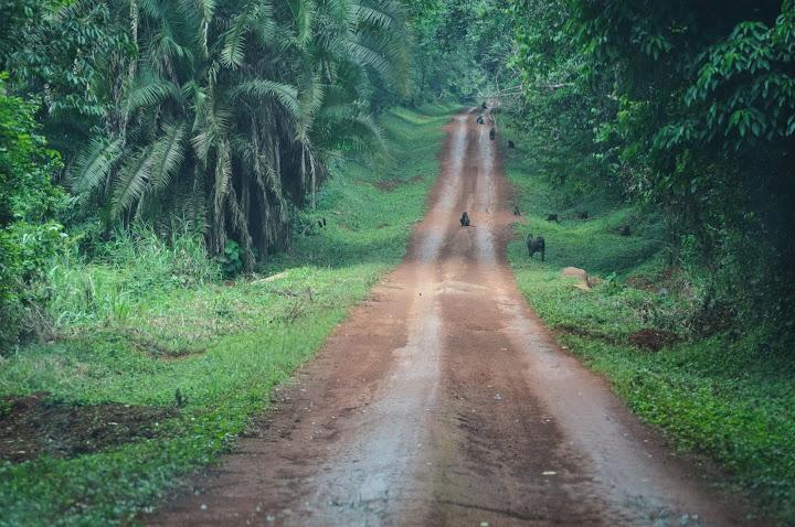 Африка Уганда фауна звірі