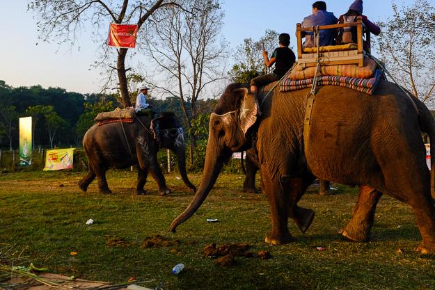 Національний парк Чітван. Фестиваль слонів.